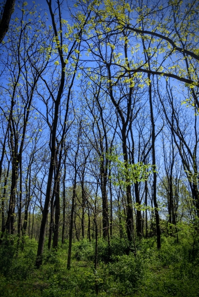 camping, woods, forest, blue sky