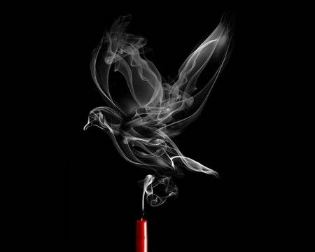 life, death, bird, smoke